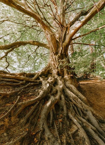The Importance Of Remembering Your Roots Business